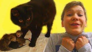 КОШЕЧКА Никиса РОЖАЕТ котят!!! Посмотрите! Теперь у нас 4 КОТЁНКА!