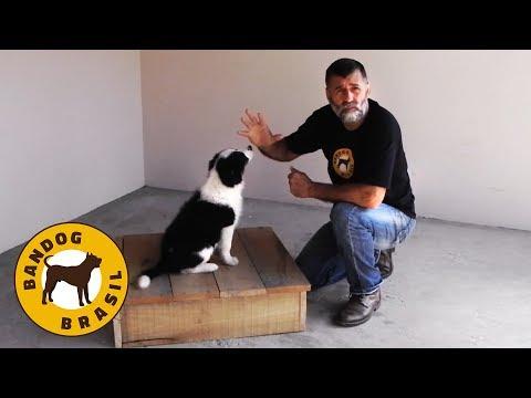 Como adestrar um cão filhote