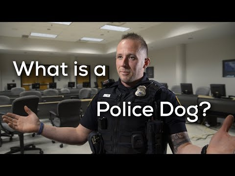 What Is A Police Dog?