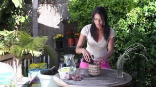 Germination of Lavender Seeds : The Chef's Garden