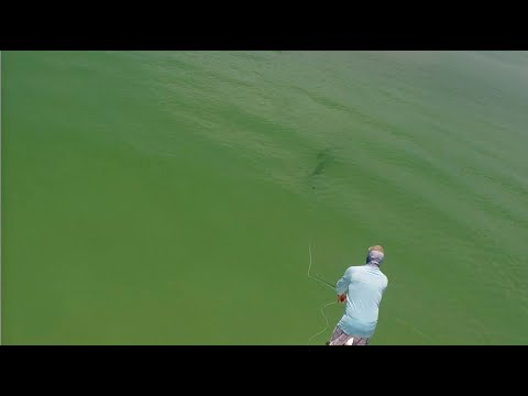 Fly Fishing Tarpon with Captain Russ Shirley of Salty Fly Charters (2020)