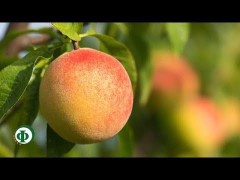 370 Персик – средство для кожи