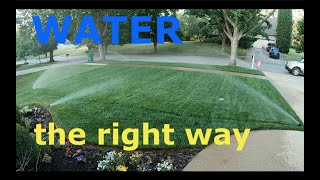 Properly WATER your lawn