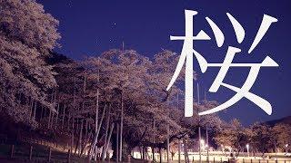 夜の淡墨桜