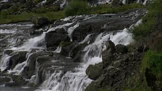 Bob Dylan (Watching the river flow)   ボブ・ディラン(川の流れを見て)