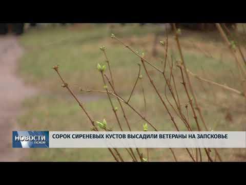 18.04.2018 # Сорок сиреневых кустов высадили ветераны на Запсковье