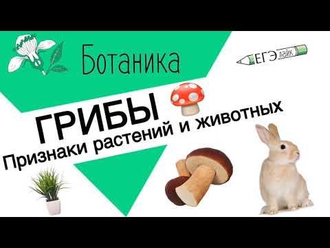 ГРИБЫ.ЕГЭ|ОГЭ.Признаки растений и животных.
