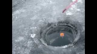 подводное видео поклевки толстолоба
