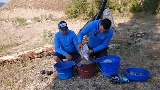 Прикормка рыболовная фиш дрим