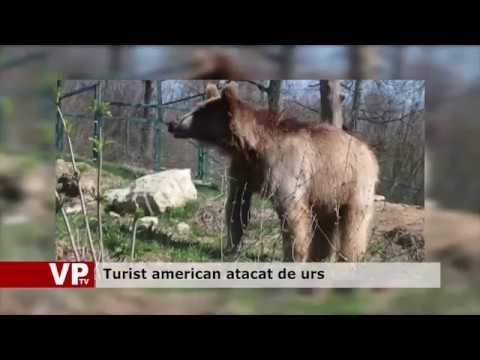 Turist american atacat de urs
