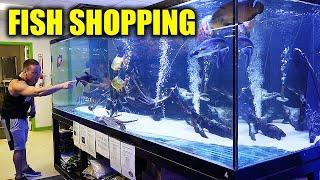 Aquarium fish shopping