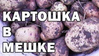 КАРТОШКА в МЕШКЕ УРОЖАЙ Экспериментальный картофель в мешках
