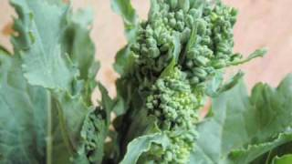 How to cook rapini (broccoli rabe)