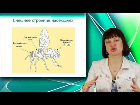 Каким лекарством можно избавиться от паразитов в организме человека