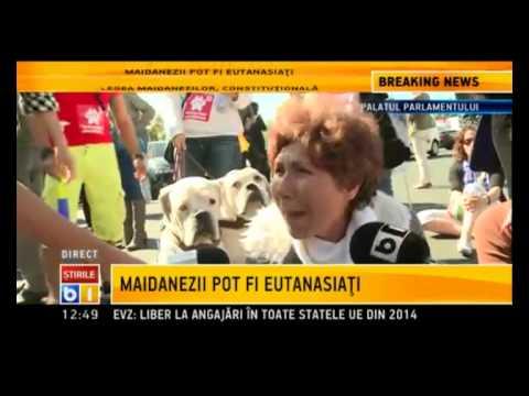Reactii ale celor impotriva eutanasierii cainilor maidanezi dupa avizul CCR/septembrie 2013