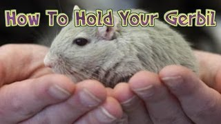 How To Hold A Gerbil