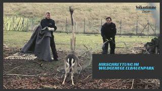 Hirschrettung Elbauenpark
