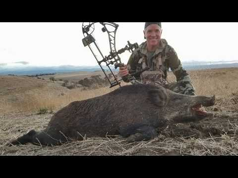 Archery Pig Hunt - Oak Stone Outfitters