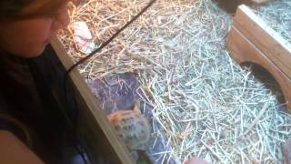 Russain tortoises from petsmart & petco!! Do not buy.
