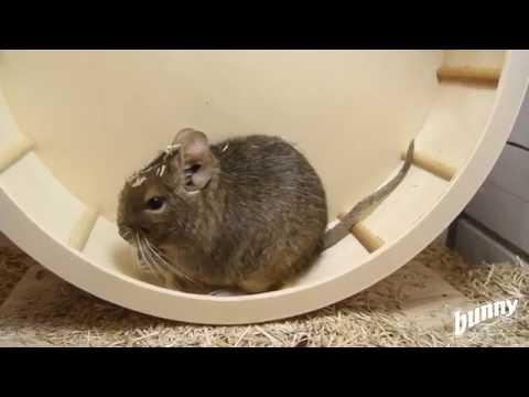 Bunny Snacks My Little Sweetheart Anis-Erva Doce