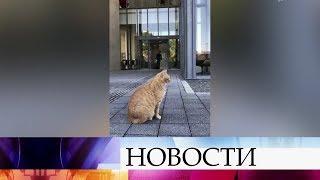 В Японии два кота третий год ведут войну с охранниками, пытаясь прорваться в музей
