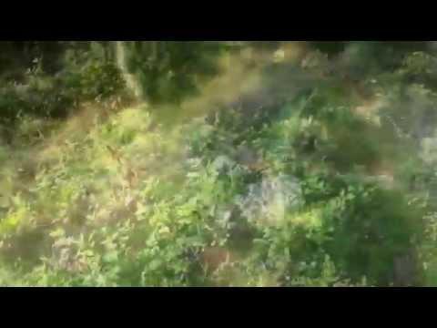 I parassiti che vivono in aringa