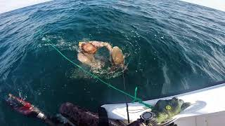 Spearfishing cobia