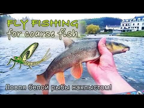 Fly Fishing for Coarse Fish