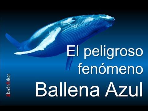 Entendiendo el fenómeno Ballena Azul