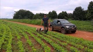 Canil do Caçador - Caçada de Javali com cachorros