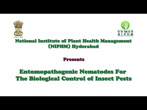 Verucă plantară microscopică