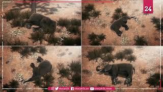 356 dead elephants — killer finally found