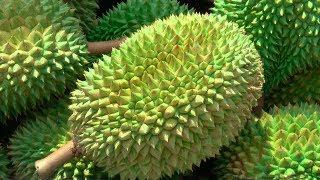 Durian Season in Singapore