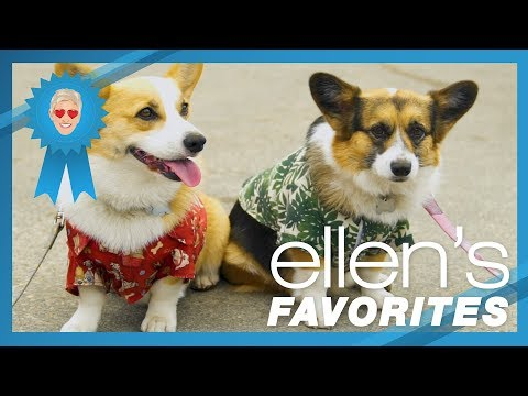 Ellen's Favorite Moments at Corgi Beach Day