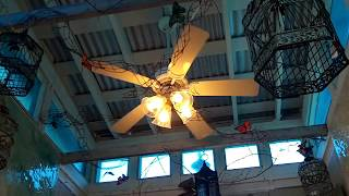 FTA Videos: Florida Ceiling Fan Sightings (2012)