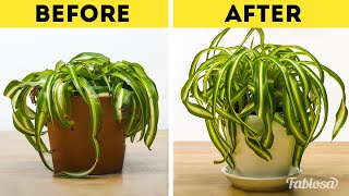How To Revive Your Dying Plants   Gardening Tutorial