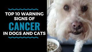 Top 10 Warning Signs of Cancer in Dogs and Cats: Vlog 81