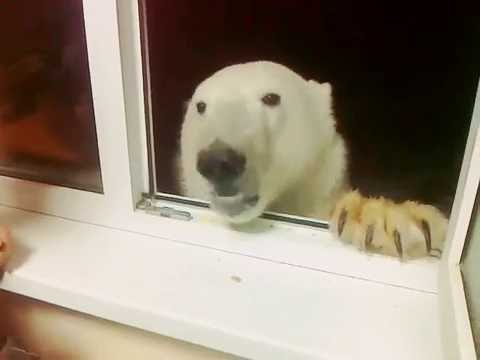 """They say """"Igor, no give dog treats, he is fat."""" Dog is no fat, he is big boned."""
