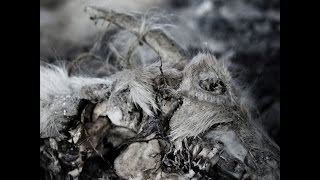 Aphonic Threnody - When Death Comes (Doomentia Records) [Full Album]