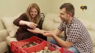 Вакцинация и отбраковка цыплят. Живой дом 139