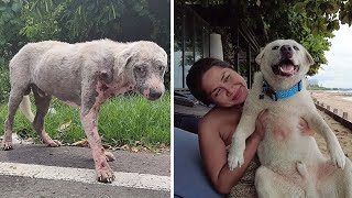Hairless Stray Dog Unable To Scrounge For Food Surrenders To Death – Until Assistance Arrives