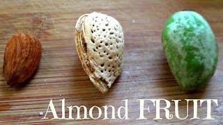 Almonds Are A Fruit! - Green Almond Review - Weird Fruit Explorer - Ep. 107