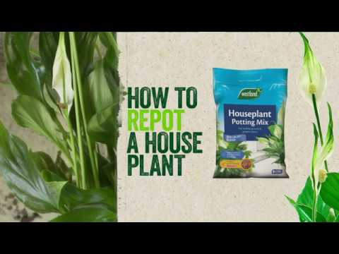 houseplant mix Video