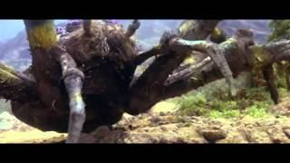 Kaiju Appreciations; Kumonga