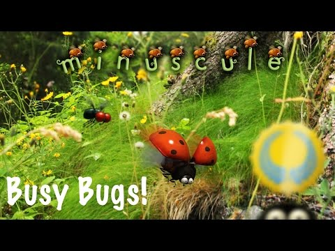 Video of Minuscule, Busy Bugs! Official