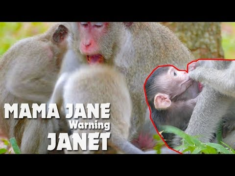 OMG! Mama Jane Warning Janet Very Hard - Jane Angry Janet Disturb Janna From Get Milk