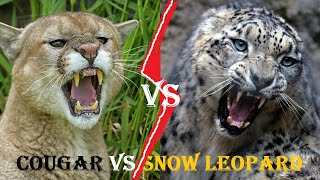 COUGAR VS SNOW LEOPARD | Cougar Vs Snow Leopard Who Would Win