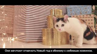 Подарки котикам на Новый год