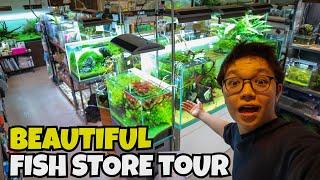 Aquarium Shop Color - wideorelacja
