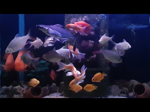 Samsung galaxy M30S camera test slow motion: my aquarium fish moment